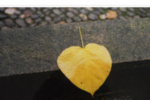 Beitragsbild-Herbstfarben-Herbstimmungen