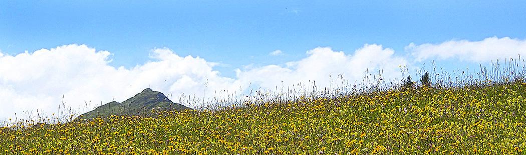 Magerwiese voller Blumen im Val Lumnezia