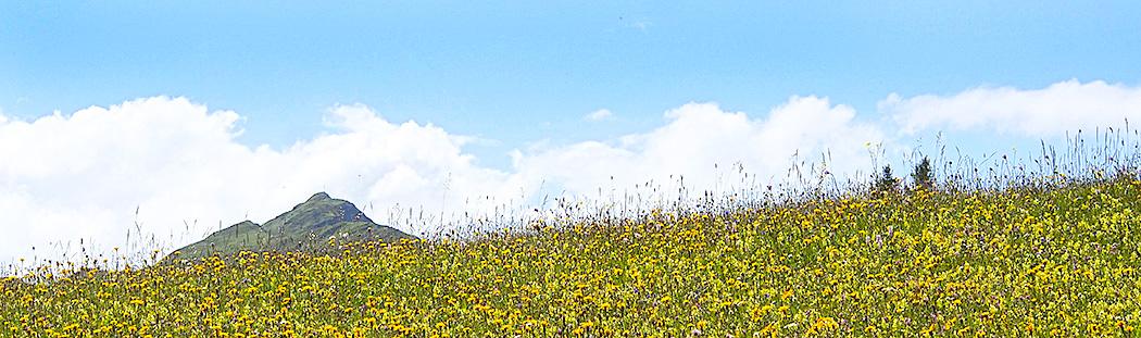 Blumenwiese-Wiesenblumen-fotografieren-Val.Lumenzia