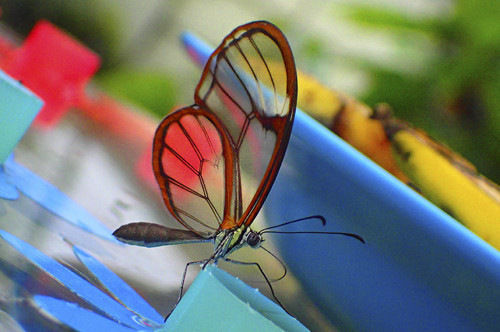 Farbenpracht-im-Papilorama Fotokurs