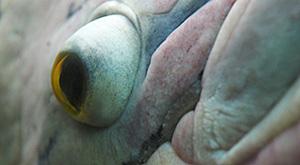 Fisch im Papilorama Fotokurs