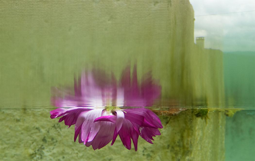 FotoCamp-Fotokurse.COM-Blume-im-Brunnen