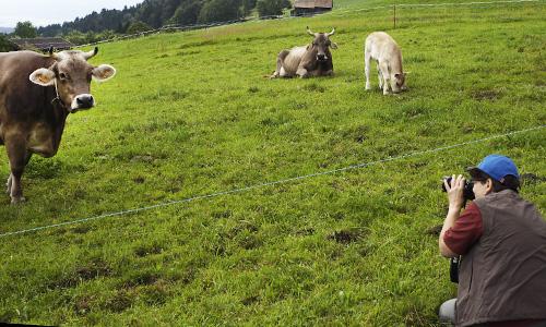 Fotoexkursion-Zürioberland-demeter-Kühe