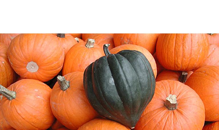 Herbstfarben-Kuerbisse-Fotokurs-Stimmungsbilder