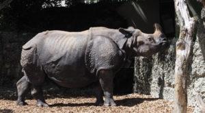 Nashorn-Bildsprache