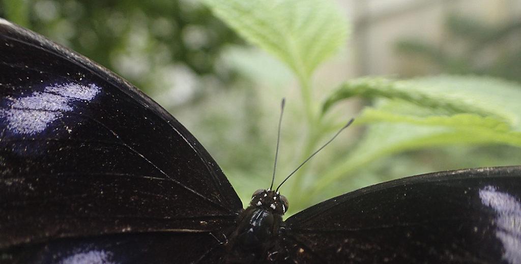 Schmetterlinge im Flug fotografieren
