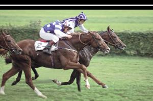 Sportfotografie - Pferde - Pferderennen Fehraltorf