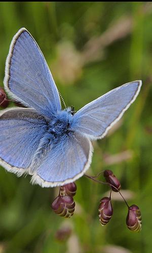 Schmetterling Foto-Exkursion Val-Lumnezia