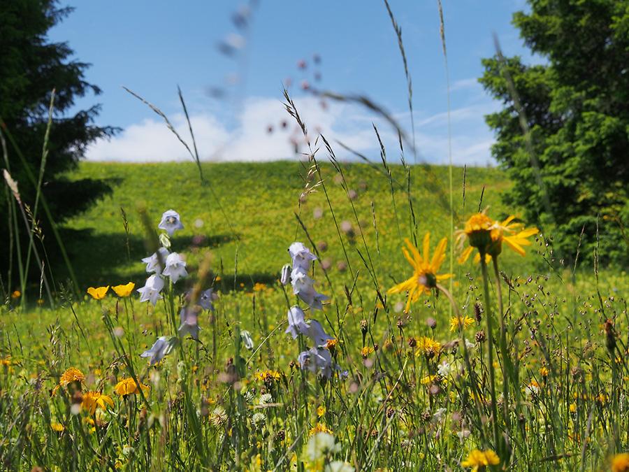 Trockenwiese-Blumenpracht-Naturfotograf