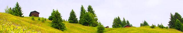 blumenwiese-Natur-Fotografie